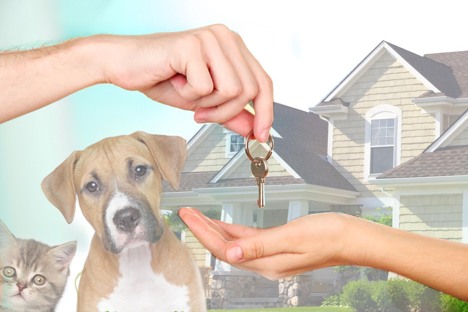 NEW-Keys-dog-cat-house-Optimized